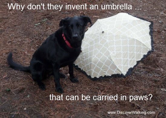 Dog With Umbrella