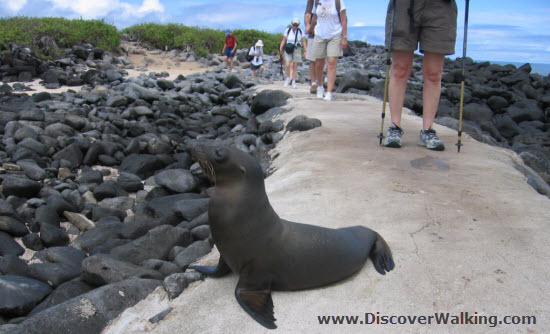 Walking With Sea Lions Galapagos Islands