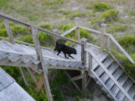 Dog Stair Walking Lessons