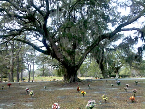 Wilmington North Carolina Cemetery